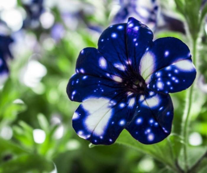 Эффектные «галактические» цветы