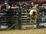 Лучшие наездники на быках поборолись за $100 000 в Нью-Йорке