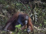 Рука помощи: орангутан попытался помочь стоявшему в воде мужчине