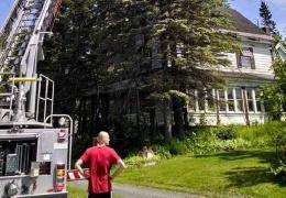 Бабуля вскарабкалась на 23-метровое дерево за любимой кошкой