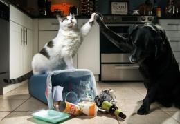Могут ли животные мстить?