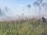 ФОТО и ВИДЕО: лесной пожар в волости Тойла взят под контроль