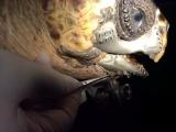 Тортилла-терминатор с титановой челюстью