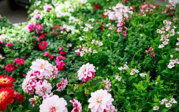 Оборот садоводческих центров вырос во время чрезвычайного положения
