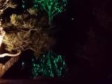 Праздник к нам (и к ним) приходит: пост о том, как украшают деревья во всём мире