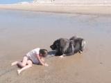 Забавный момент собака тащит внучку своего хозяина из воды