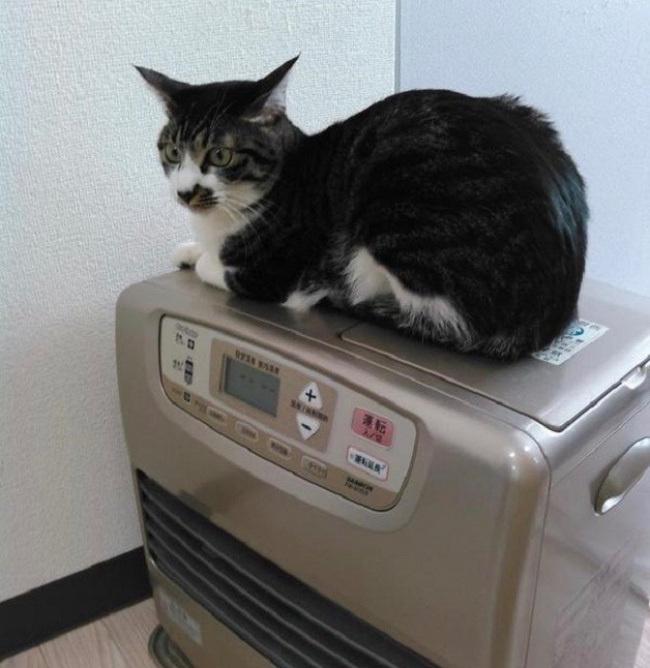 В Японии фирма разрешила работникам приносить на работу своих кошек!