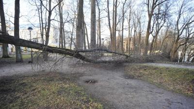 В Эстонии штормит: спасатели получили более 220 вызовов