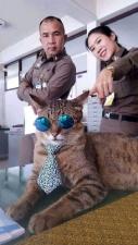 Кот-полицейский на страже Таиланда