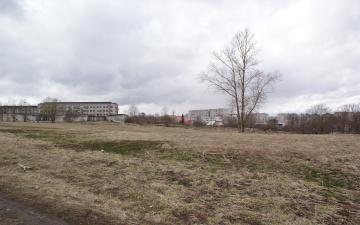 К 100-летию Эстонской Республики в Нарве планируют разбить парк с экзотическими деревьями