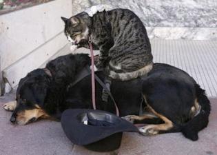 Кот, пес и мышь