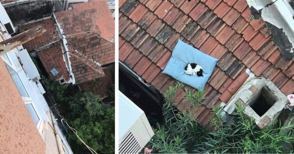 У чела упала подушка с окна. Пока думал как достать, её уже обжили