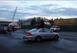 Морской лев разлегся на крыше автомобиля