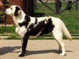 Необычная окраска собак