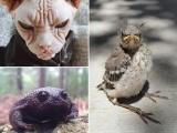 Подборка самых сердитых животных в мире