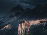 Потрясающие портреты диких животных Конста Пункка