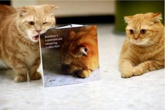 Симпатичные коты