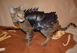 Боевой кот - истребитель ящериц