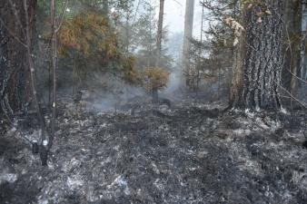 В Ида-Вирумаа новый лесной пожар: садоводов в Вайвара просят закрыть окна из-за сильного дыма