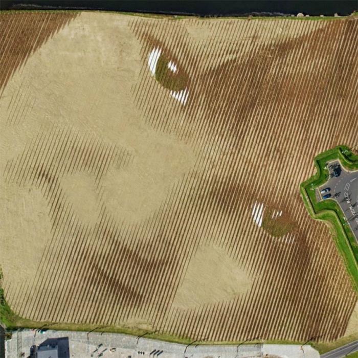 Портрет, размером 45 тысяч квадратных метров