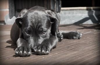 В Нарве расследуют дело об избиении собаки
