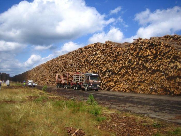 Крупнейшее в мире хранилище древесины в Швеции