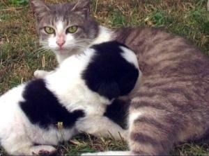 Мутация или генная несовместимость. У матери-кошки родился щенок