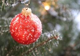 Рождественская живая ель будет установлена на Петровской площади 24-25 ноября
