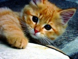 Симпатичные и милые маленькие котята