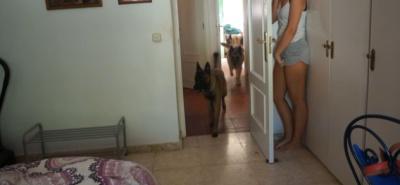 Хозяйка решила сыграть в прятки со своими собаками