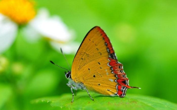 Красивые фотографии с бабочками