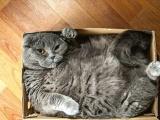 Неотъемлемый талант котов - спать в самых неудобных местах