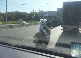 Новосибирская школьница спешит на линейку