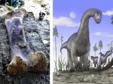 Ученые нашли 2-метровую бедренную кость весом полтонны, принадлежавшую гигантскому динозавру