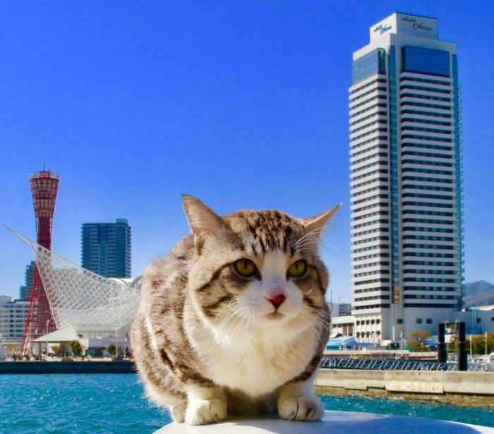 Фотогеничный кот Ньянкичи из Японии