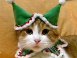 Одетые кошки