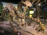 Итальянские таможенники конфисковали яйцо динозавра возрастом 159 миллионов лет