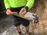 Строители из Австралии нашли самую тяжелую в мире моль