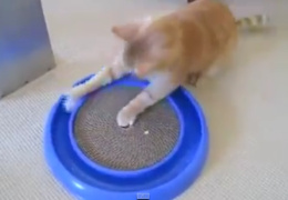 Одна из самых лучших кошачьих игрушек