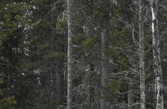 Фотограф заснял сову на дереве, и маскировке этой птички позавидует любой ниндзя