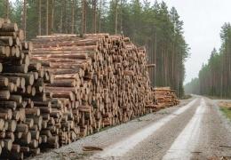 Прирост лесов Эстонии намного превышает объемы вырубки, а древесина используется по максимуму