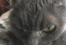Кошка не может найти новых хозяев из-за своей угрюмой морды