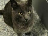 Кот вернулся к хозяину благодаря микрочипу