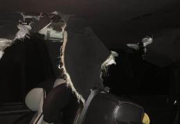Салон авто после того, как в нем случайно заперся медведь