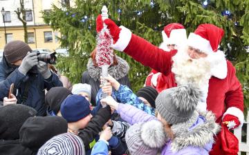 Нарва ищет рождественскую ель