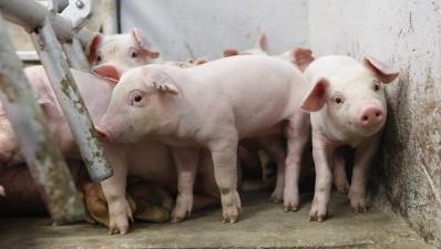 Эстония запретила ввоз свинины из Литвы