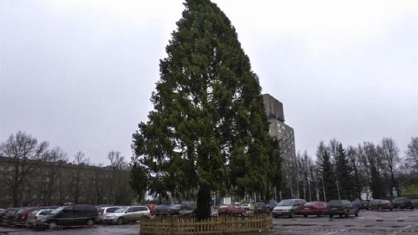 В Нарве все-таки установят новогоднюю ель