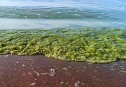 Семейный врач: при глотании воды с сине-зелеными водорослями возможны ожоги слизистой рта