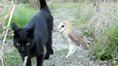Сова, выходи. Необычная дружба кота и совы