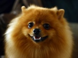 Фоторепортаж с выставки собак